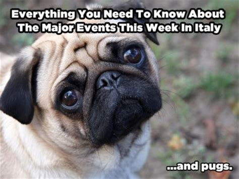 everything you need to about pugs everything you need to about the events in italy this week