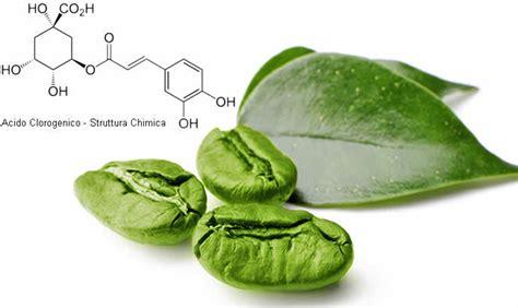 l acido clorogenico in quali alimenti si trova acido clorogenico