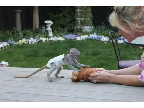 free puppies dothan al monkeys dothan al free classified ads