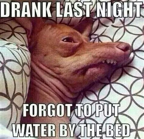 Hangover Meme - afternoon funny pictures 48 pics