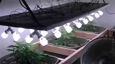 Cfl Grow Light Setup by Organic Cfl Indoor Marijuana Grow Part 1