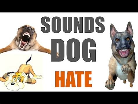 sounds dogs hate  time hq youtube