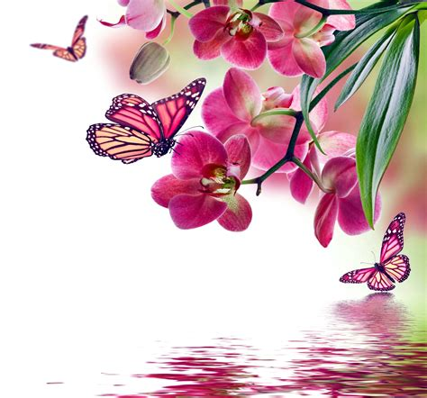 orchid blue water reflection flowers beautiful orchid heartfulness meditation the seminar center