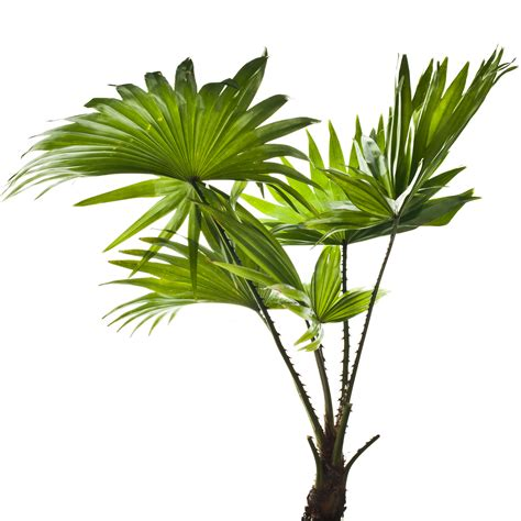 different types of tropical plants trees flowers thoughtful reasons to give a tropical plant as a christmas