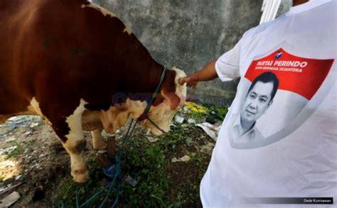 Bibit Sapi Kupang hebat partai perindo ntt bangun areal khusus ternak sapi okezone news
