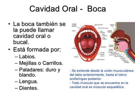 vestibulo y cavidad bucal histologia de la cavidad bucal