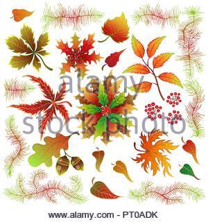 Roter Fächer Ahorn 1644 by Bl 228 Tter Im Herbst Auf Wei 223 Em Hintergrund Einfache