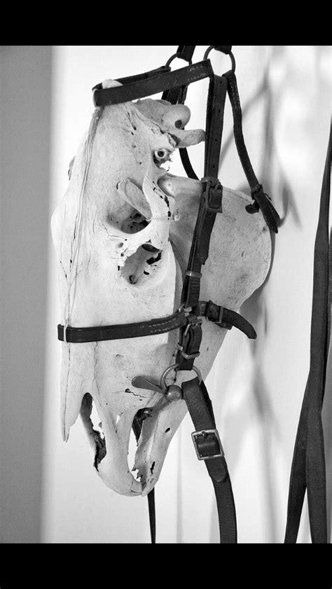 Happy Horse | Horse skull, Bone art, Skull art