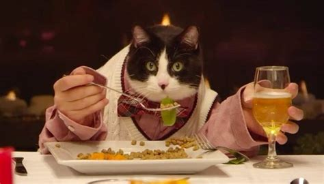 alimentazione corretta gatto alimentazione corretta gatto alimentazione corretta