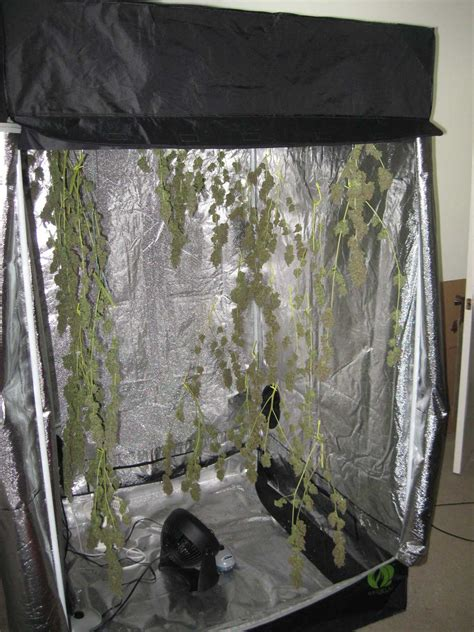 Best Indoor Plants Little Light by Drying And Curing Cannabis Weed Co Za