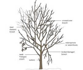 Tree Pruning Branches To Prune