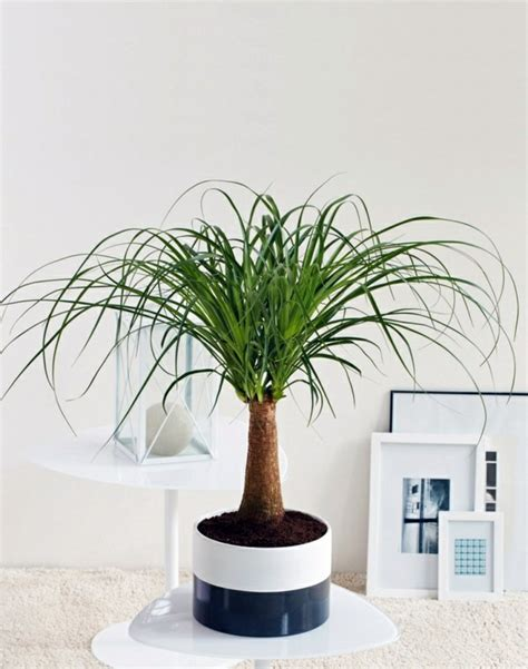 Feng Shui Small Bedroom feng shui plants for harmony and positive energy in the