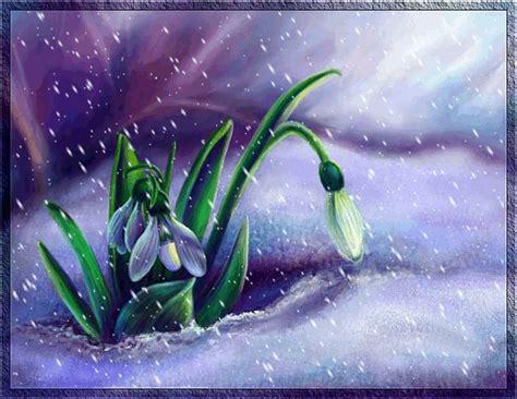 fiore simbolo di speranza bucaneve il fiore della speranza lella rosaria