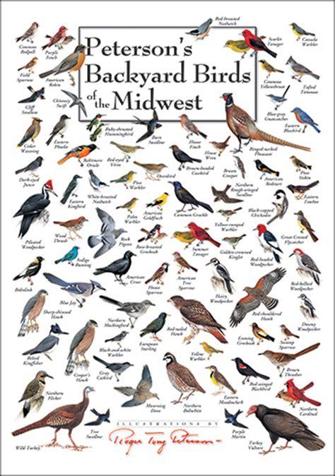 backyard bird identification backyard bird identification chart