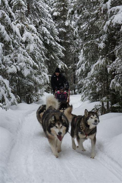 sledding canada sledding in canada sled dogs