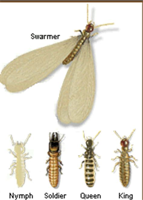 bathroom bugs with wings why do termites lose their wings new orleans pest control