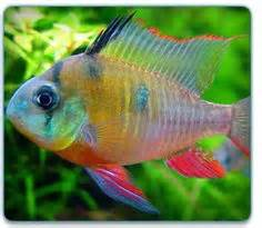 fish     Dogs Cats Birds & Small Animals Cold Water & Tropical Fish