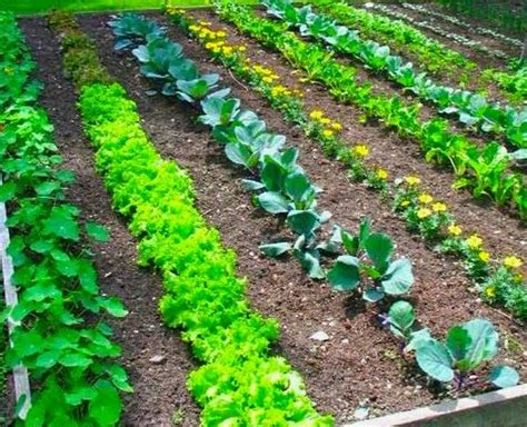 How To Grow A Vegetable Garden Gardening Abc When To Start Planting A Vegetable Garden