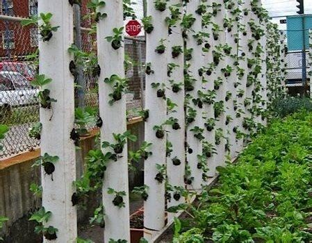 Vertical Gardening Using Pvc Piping I Have 2 Flower Pvc Pipe Vegetable Garden