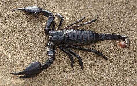is a scorpion an insect why or why not
