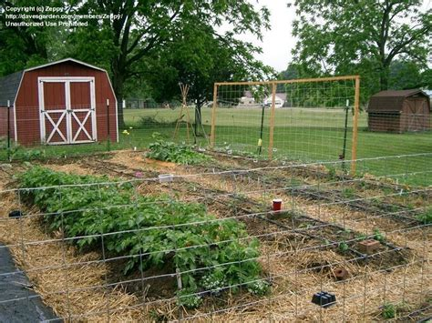 Cheap Garden Trellis Ideas Cheap Garden Trellis Ideas Photograph Vegetable Garden Tre
