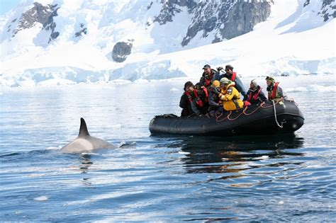 boat cruise january 2019 classic antarctica mv ushuaia jan 2019 freestyle