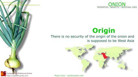 onion medicinal herb info maxresdefault jpg