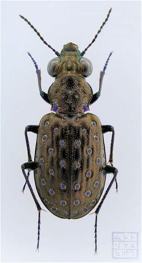 Amazing Beetles 17 best images about bugs insects on sculpture textiles and tardigrade