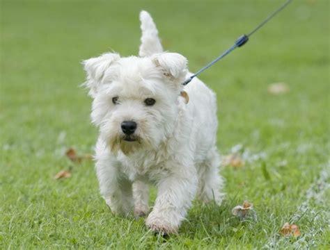 breeds alphabetical list of breeds alphabetical breeds picture