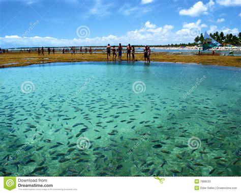 imagenes señales naturales pescados en una piscina natural del mar fotos de archivo