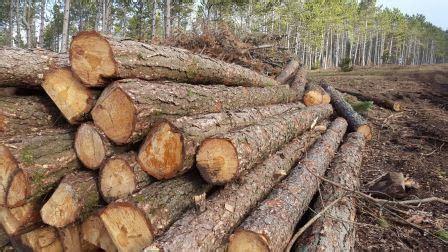 in tronchi di legno tronchi di legno di pino biomassapp