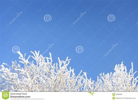 Frozen Sky Blue frozen branches against blue sky royalty free stock