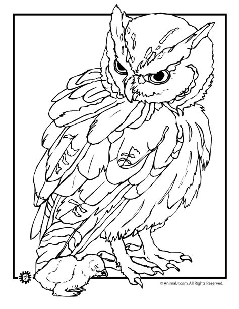realistic owl coloring page image detail for owl coloring pages realistic owl and