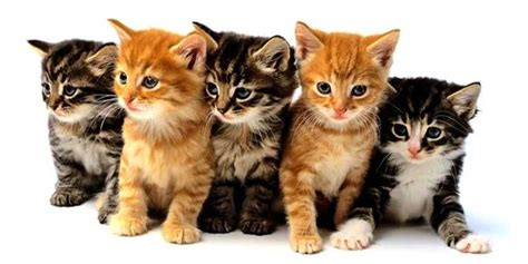 Litter Of Kitties by Offbeat Crashes After Being Distracted By A Litter