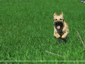 Dogs Dogs Wallpaper 59