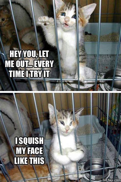 Cute Funny Cat Memes - cute cat memes