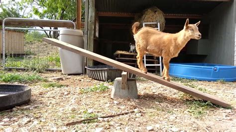 simple playground equipment   goats youtube