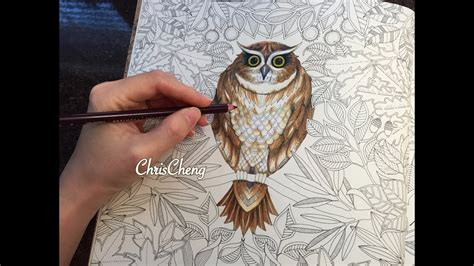 what color are owls owls drawing coloring with colored pencils secret