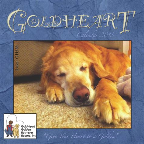 goldheart golden retriever rescue golden retriever rescue photograph 2013 calendars goldheart golde