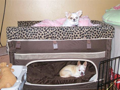 dog bedroom furniture dog bunk bed in the bedroom