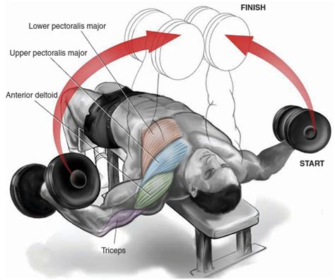 Dumbbell Flys Floor by Mens Chest Workouts Most Effective Chest Workouts All