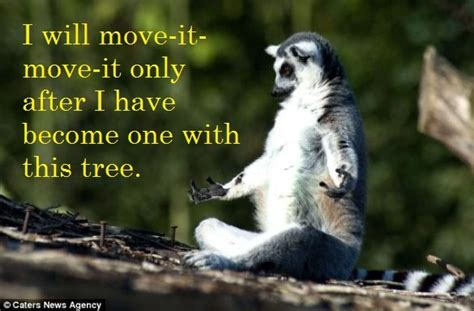 Lemur I Like To Move It Move It by I Like To Move It Move It Things That Make Me Lol