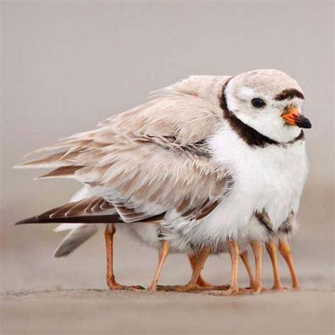 imagenes opticas reales ilusiones 243 pticas reales con perspectiva taringa