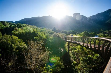 Kirstenbosch Botanical Gardens 100 Things To Do In Winter In Cape Town Cape Town Tourism