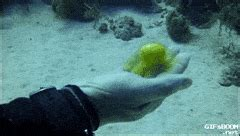 underwater wallpaper gif fish animal gifs search find make share gfycat gifs