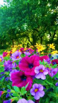 bright colored flowers for the garden pictures photos