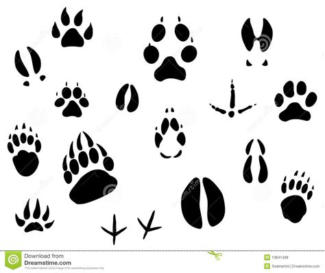 animal footprints royalty free stock photos image 13841498