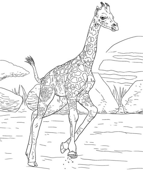 Difficult Giraffe Coloring Pages | get this giraffe coloring pages hard printables for older