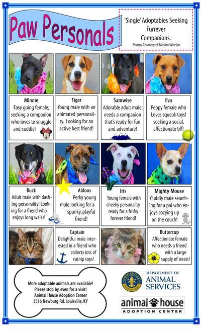 animal house adoption center louisville ky animal house adoption center louisville ky house plan 2017
