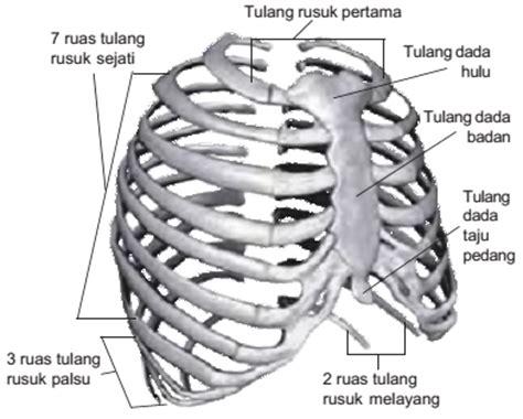 5 G Gelang Tulang Hiu rangka badan seberkas cahaya